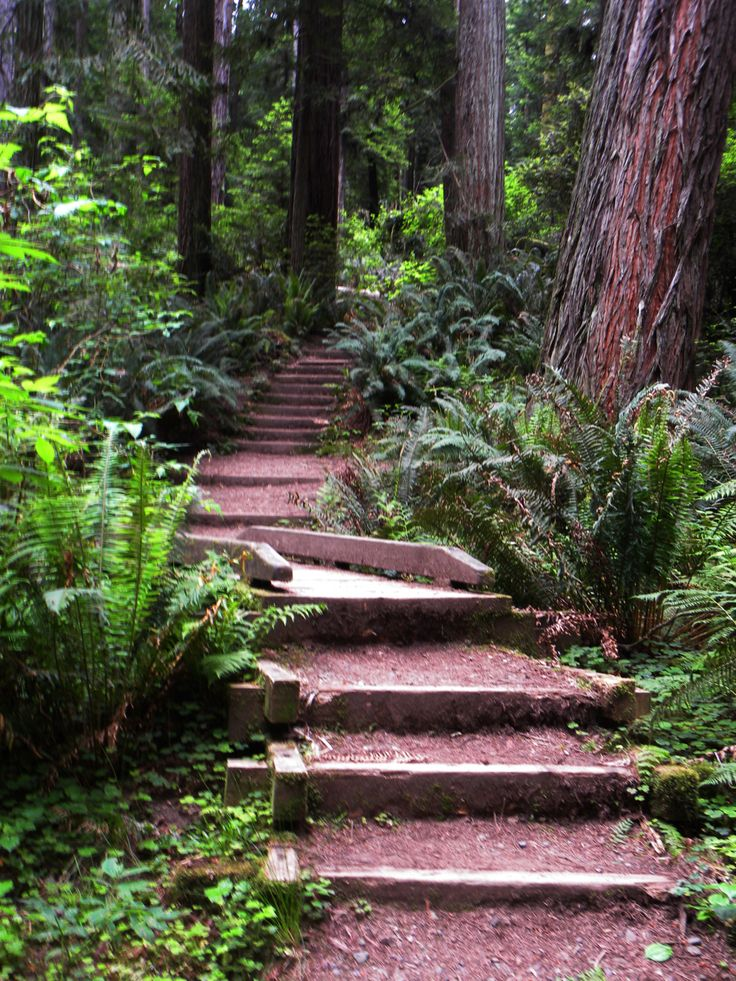 A Path Into the Woods - by Sheryl - This path is in the Redwood National Park in Humboldt County. It's easily accessible through Humboldt State University.