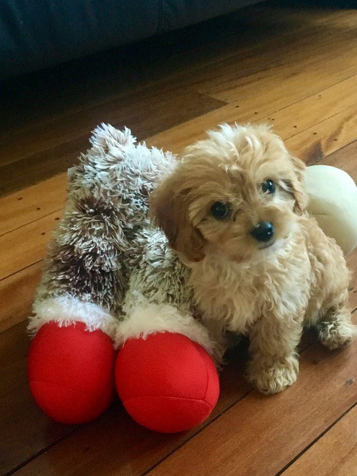Aww tubles u are sooo cute Cute puppies, Cute animals, Cute