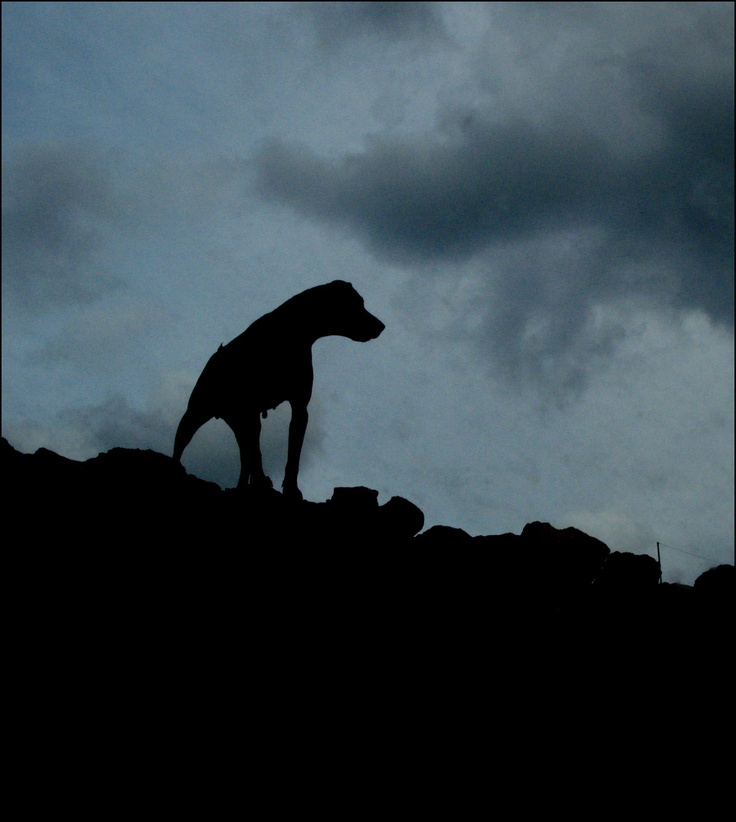Картинка смешная собака баскервилей, стену