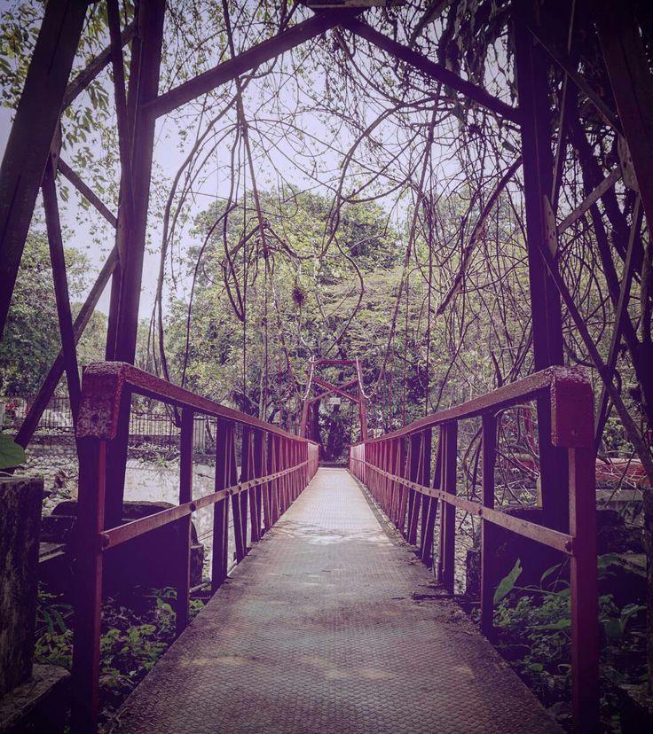 Kebon Raya Bogor, Bogor, Indonesia
