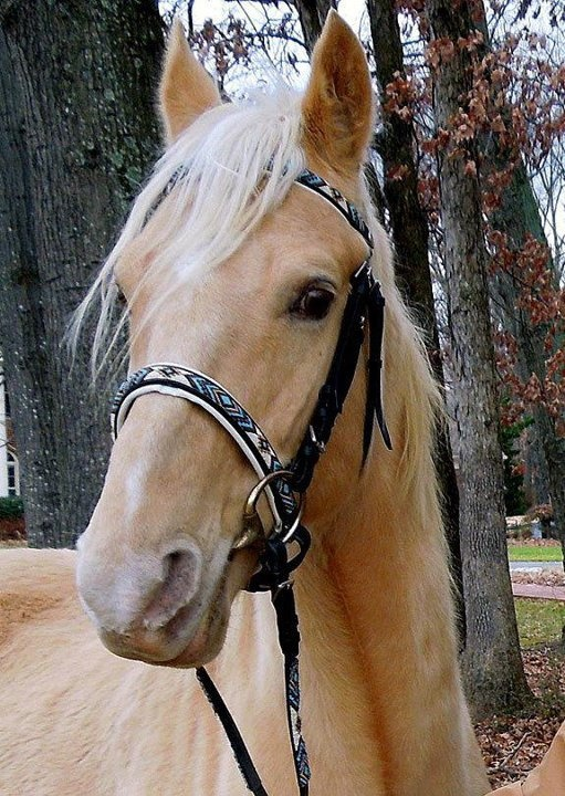 Beaded Horse Bridles by Cindy Walker beadedsaddle on Etsy!