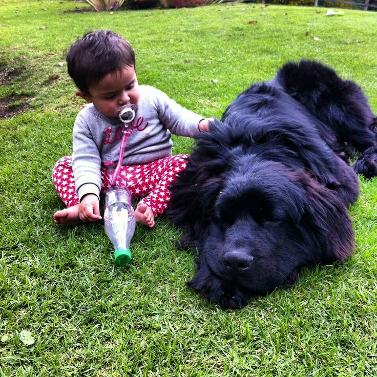 Newfie and baby