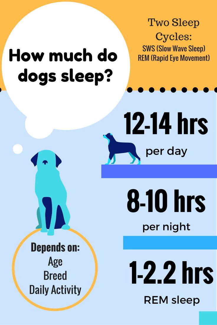 How Many Hours Do Dog Sleep Per Day