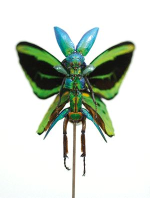 Insect Taxidermy Fairies by Cedric Laquieze