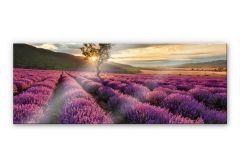 Acrylglasbild Lavendelblüte in der Provence - Panorama 01