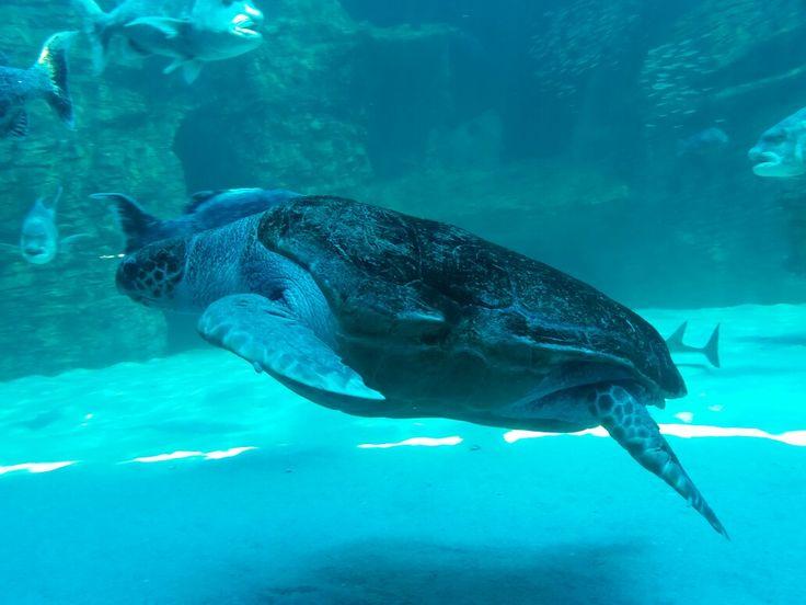 Turtle, Two Oceans Aquarium, Cape Town, South Africa