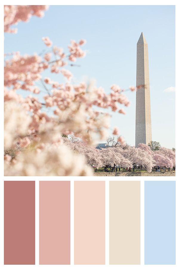 Washington Dc Cherry Blossom Photo Print Fine Art Wall Art Home Decor Calm Color Palette Color Palette Color Schemes Colour Palettes