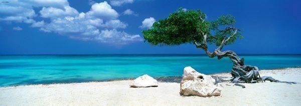 Puzzle 1000 pièces Divi Divi Tree Aruba, Antilles, The Netherlands Photo de Tom Mackie Réf : 29399 Heye www.puzzlemanie.fr