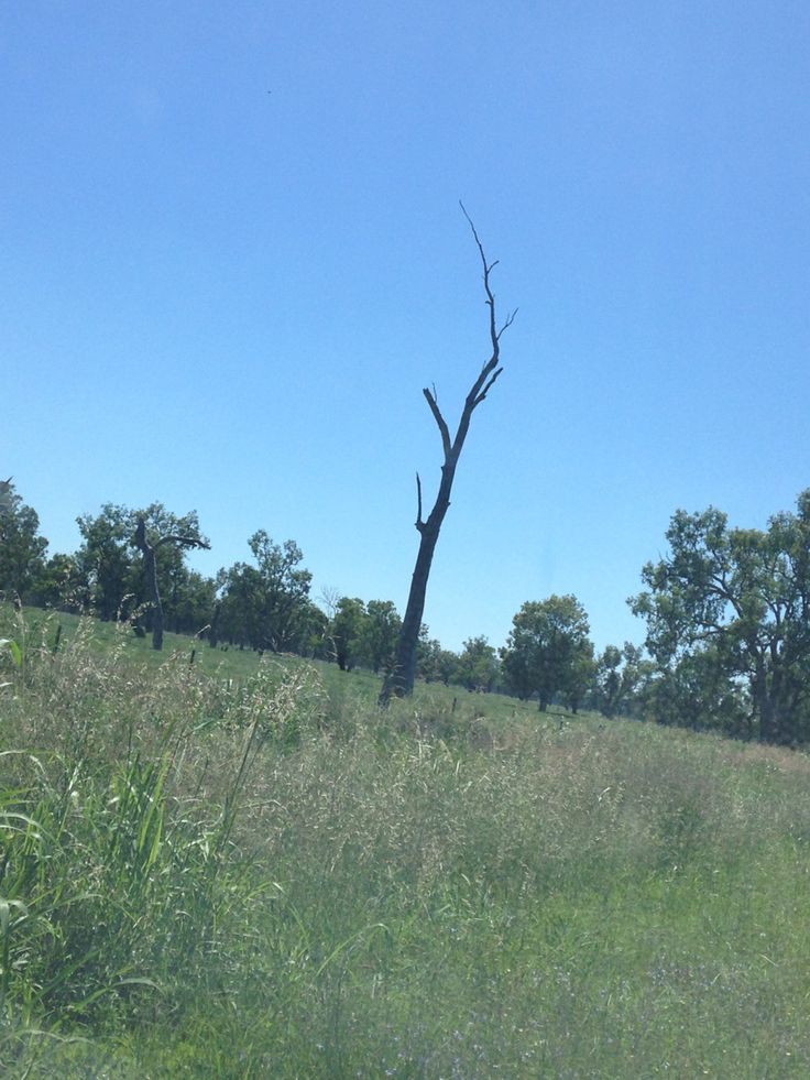 Carroll NSW