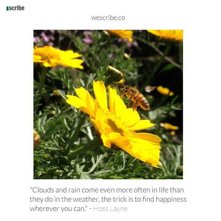 Check it out www.wescribe.co Scribe is social writing platform for authors and readers to share texts and expand their audiences.