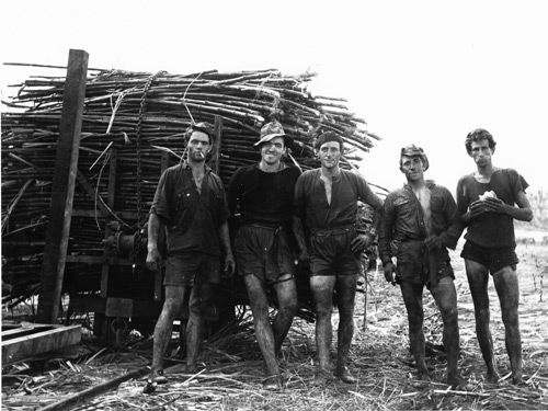 Cane-cutting Cane-cutting was a back-braking job undertaken by many Italian migrants in both NSW and QLD. The cane-cuting gang seen here is 'taking a break' on McEvoy's farm, Innisfail, QLD September 1958. Courtesy of David Murphy
