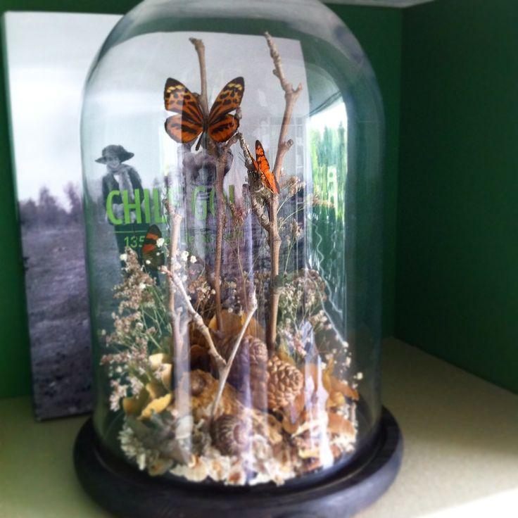 Fanal con mariposas, diseño Cristian Pizarro