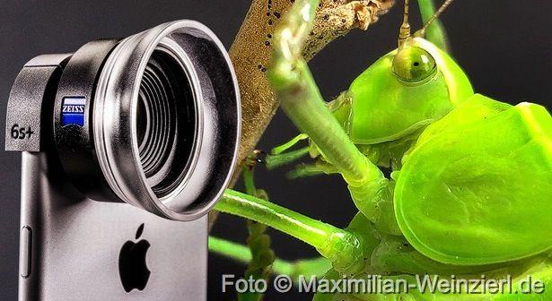 Maximilian Weinzierl – Fotografie – Blog: iPhone Macro, awesome !