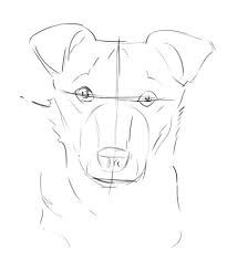 Image result for artistic anatomy of a dog's eye