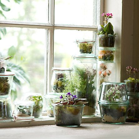 Tiny Terrariums in Weck Jars #shopterrain