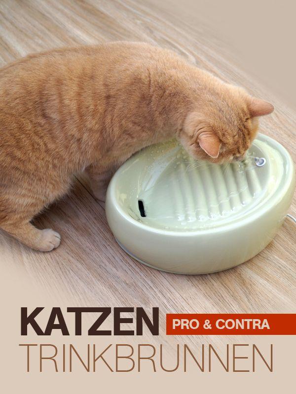 Der Lucky Kitty Trinkbrunnen für Katzen - eine sprudelnde Idee