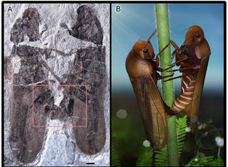 """these  froghoppers somehow died while they were having sex, and they have now been doing the deed (in fossil form) for about 165 million years. """"froghoppers' genitalic symmetry and mating position have remained static for over 165 million years."""""""