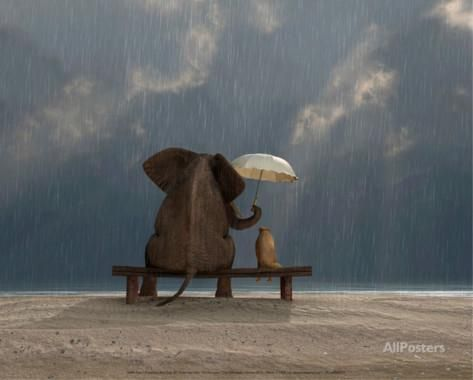 Elephant and Dog Sit Under the Rain Posters by Mike Kiev at AllPosters.com