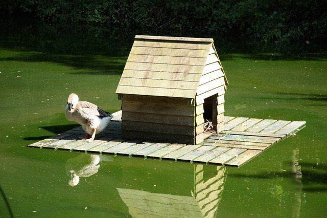 Floating duck house woodworking talk woodworkers forum for Domestic duck house plans