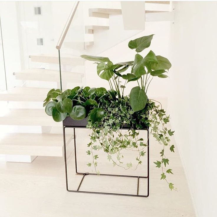 ferm LIVING Plant Box: http://www.fermliving.com/webshop/shop/green-living/plant-box-black.aspx