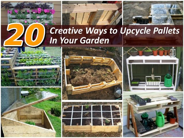 54 best fast growing plants for privacy images on for What to grow in a pallet garden
