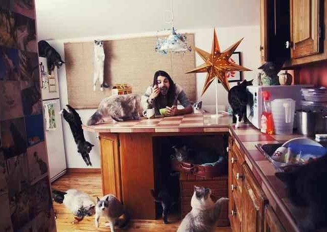 Сумасшедшие любители кошек