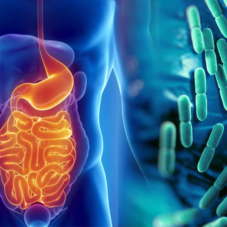 """Alpha Plus – kunskapsföretaget!   Har du hört talas om """"mikrobiom"""" och är lite osäker på vad det är? På vår hemsida har vi enkel och lättfattlig info som ger en bra översikt.  Vill du som hälsokliniker fördjupa dig ytterligare, håller vi även kurser inom ämnet i höst!  #mikrobiom #hälsa #näringförlivskraft"""