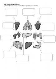 English worksheet: Body Organs