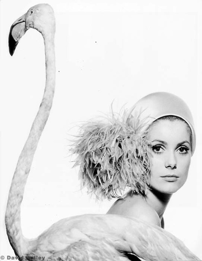 David Bailey: One of the great icons of photography.