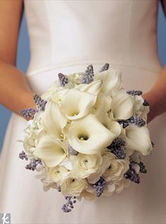 """For this all-white bouquet of calla lilies and ranunculus, a little """"something blue"""" comes from the fragrant grape hyacinth.  Photo: Wendell Webber"""