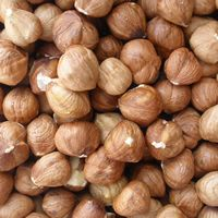 Makin dry nuts || Process and trade in Hazelnuts kernel - Greek and Turkish Hazelnuts long and round type