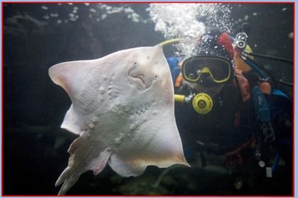 Anglesey Sea Zoo – Anglesey Family Attractions