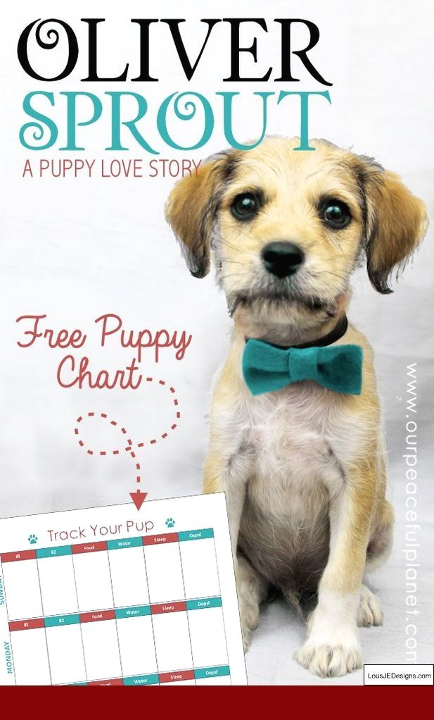 Tips For Toilet Training A Puppy And Pics Of How To Teach Your Dog
