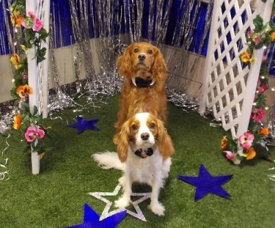 Doggy Prom at Best Friends Pet Care at WDW