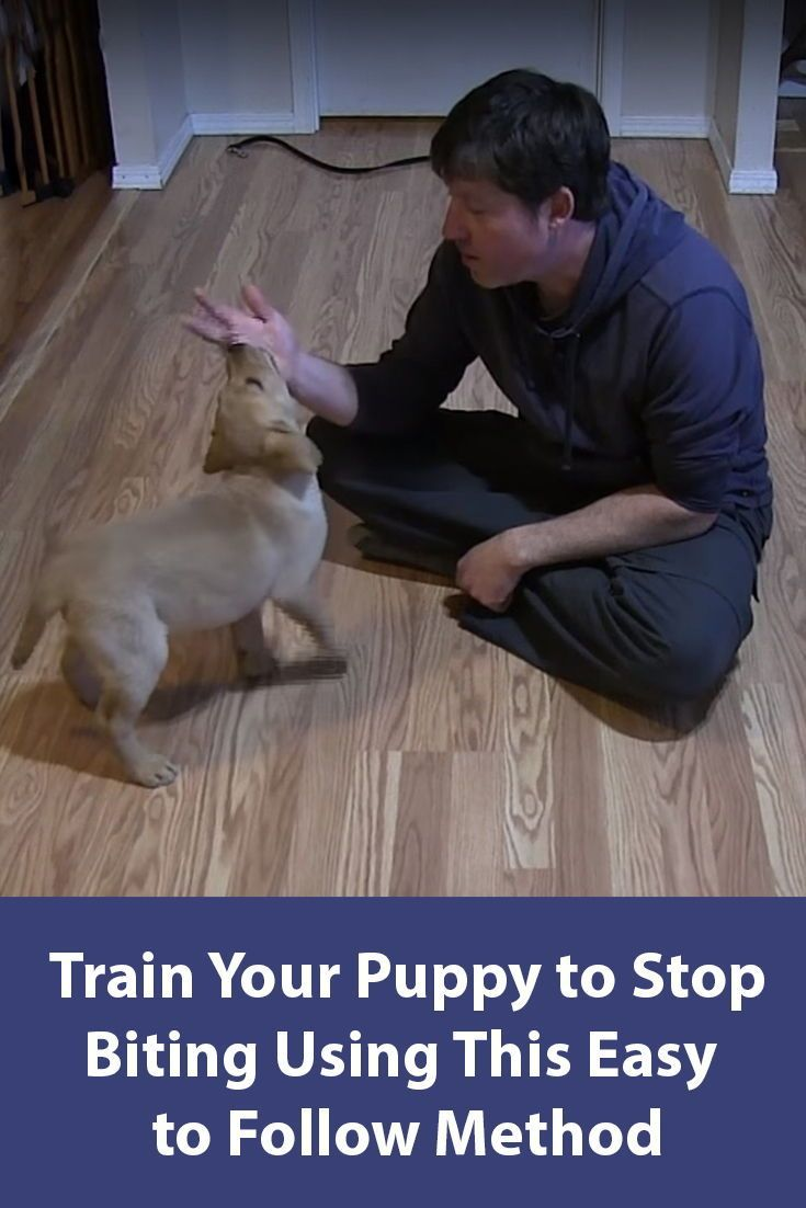 Teach Your Puppy To Stop Biting Puppy Biting Puppies Training