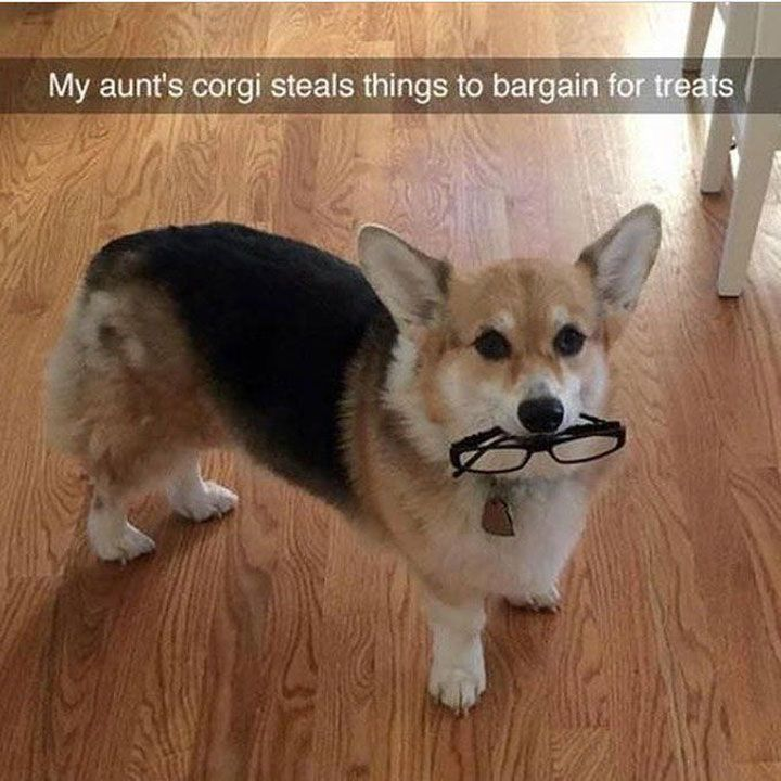 Funny Dog Pictures Dump of the Day - 22 #FunnyDog