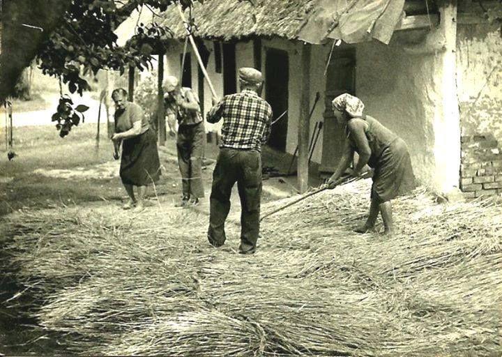 """Zsúpkészítés  """"Völgyifalu, Tuboly Etelka háza, Lendva-vidék, 1960-as évek eleje."""