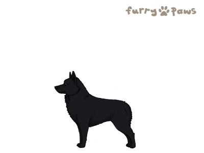 Furry Paws // WCHu Kip's Silly Sally [0INT 21HH 1.442] 8.2 *BoB*'s Kennel
