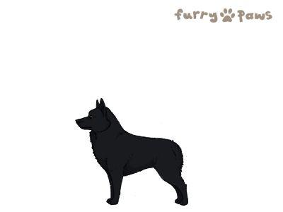 Furry Paws // CCT Kip's Razzles [19HH 1.350]'s Kennel