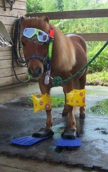 horsing around..lol | Laugh out Loud | Horses, Oakley ...