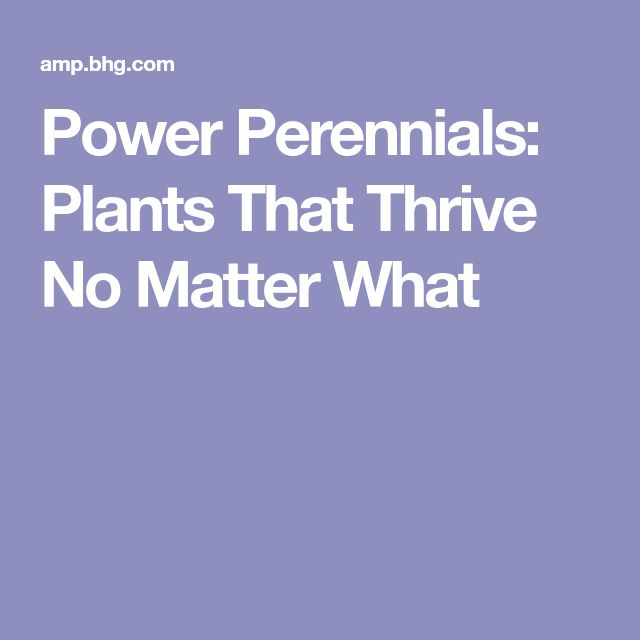Power Perennials: Plants That Thrive No Matter What