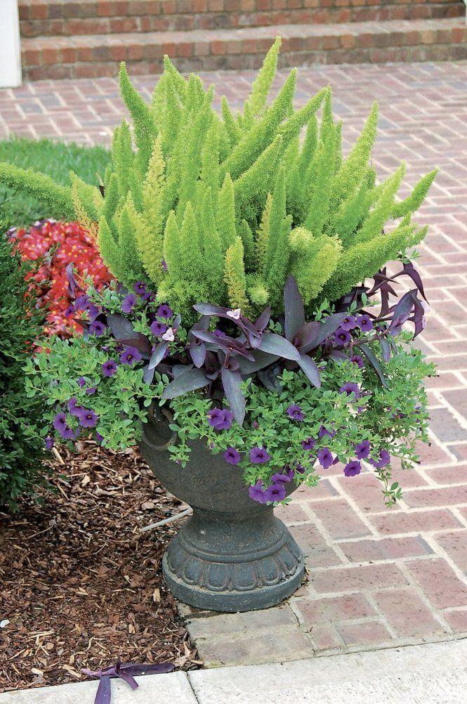 Best 20+ Purple Heart Plant ideas on Pinterest | Purple plants ...