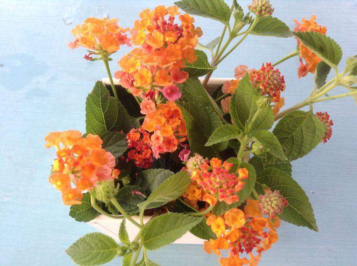 Wild tropical Balinese flower