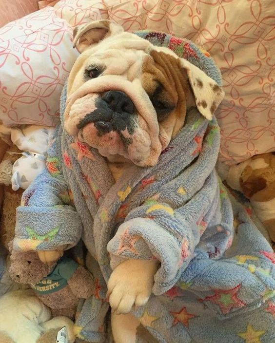 i want to snuggle with this cutie