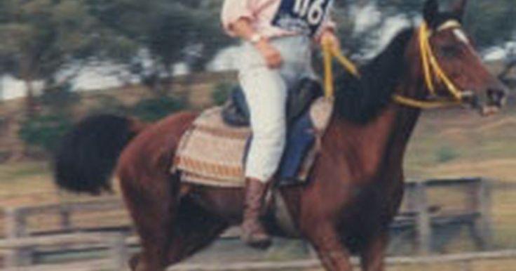 Como Alimentar um Cavalo de Corrida. Alimentar um cavalo de corrida é fundamental para o seu sucesso, sua saúde e longevidade no esporte. Pode fazer toda a diferença. Continue a ler para aprender como alimentar um cavalo de corrida.