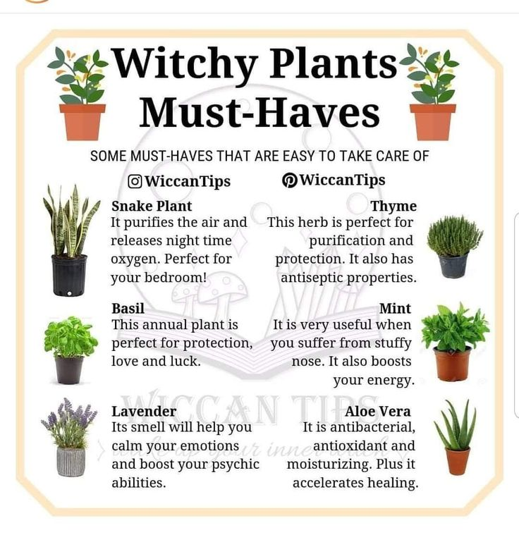 Plant must have
