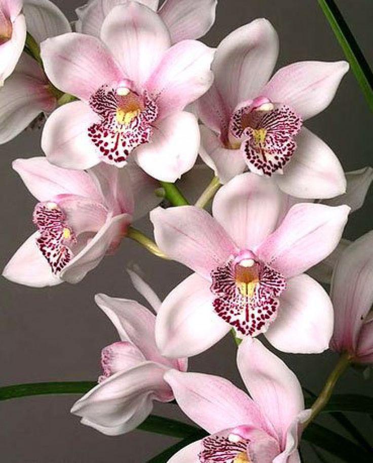 Орхидеи фото цветов открытки