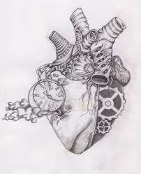 Resultado de imagen para corazon humano dibujo a lapiz