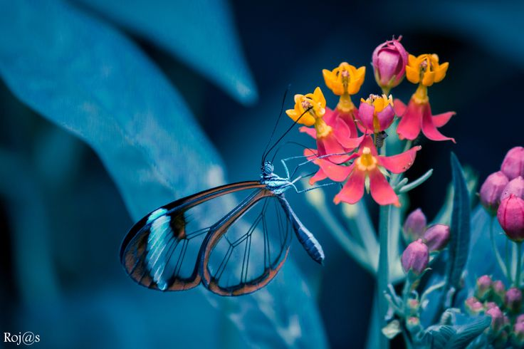 cristal wings and the caterpillar by Vinny Rojas on 500px