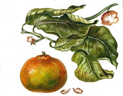 """Check out new work on my @Behance portfolio: """"New Year postcards in botanical art style"""" http://be.net/gallery/33062859/New-Year-postcards-in-botanical-art-style"""